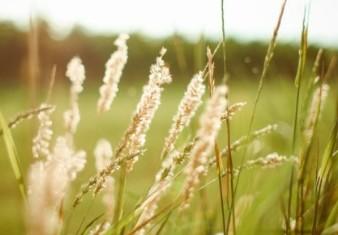 hierba-del-verano-al-atardecer_385-19321082